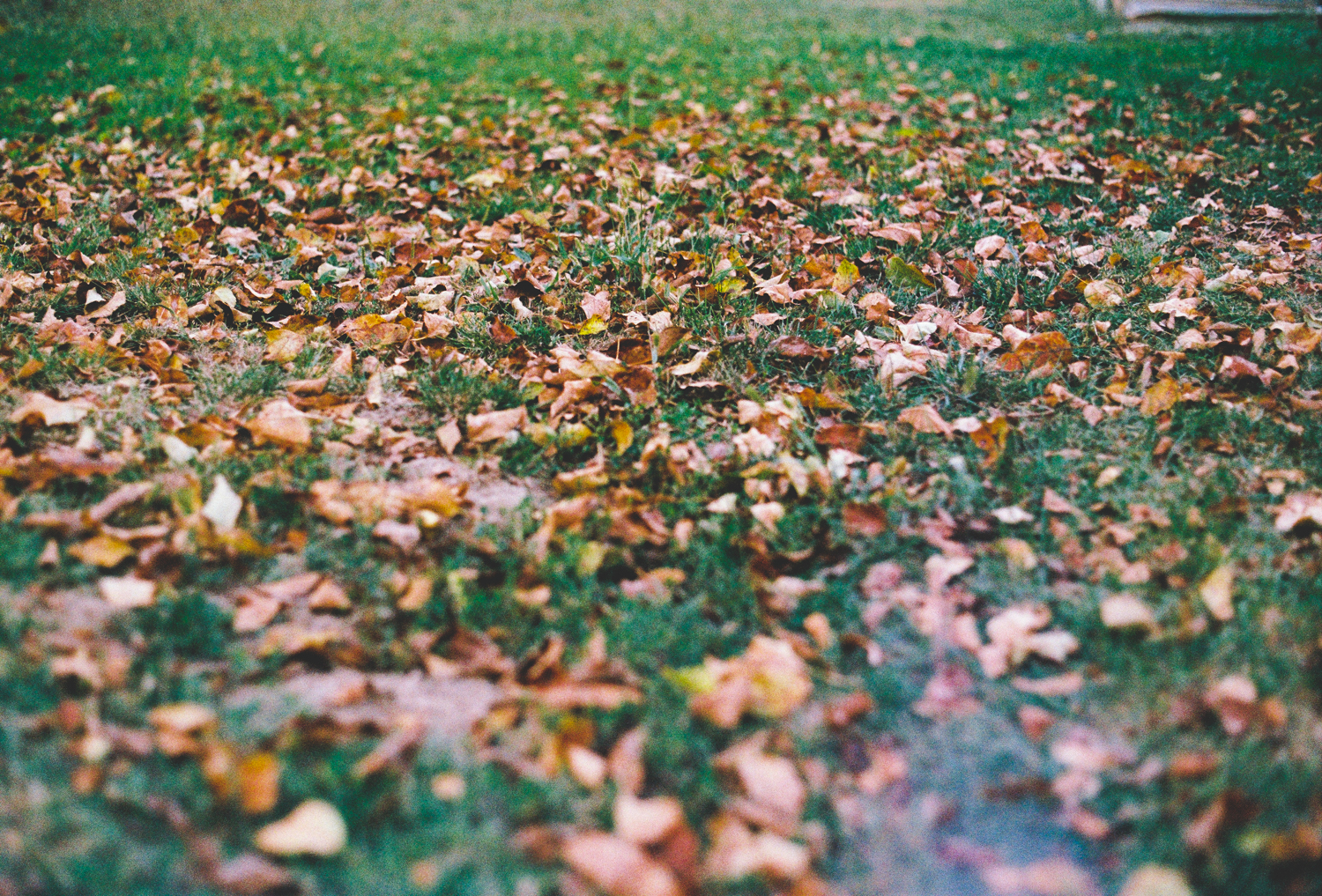 Autumn Snapshots – 35mm film