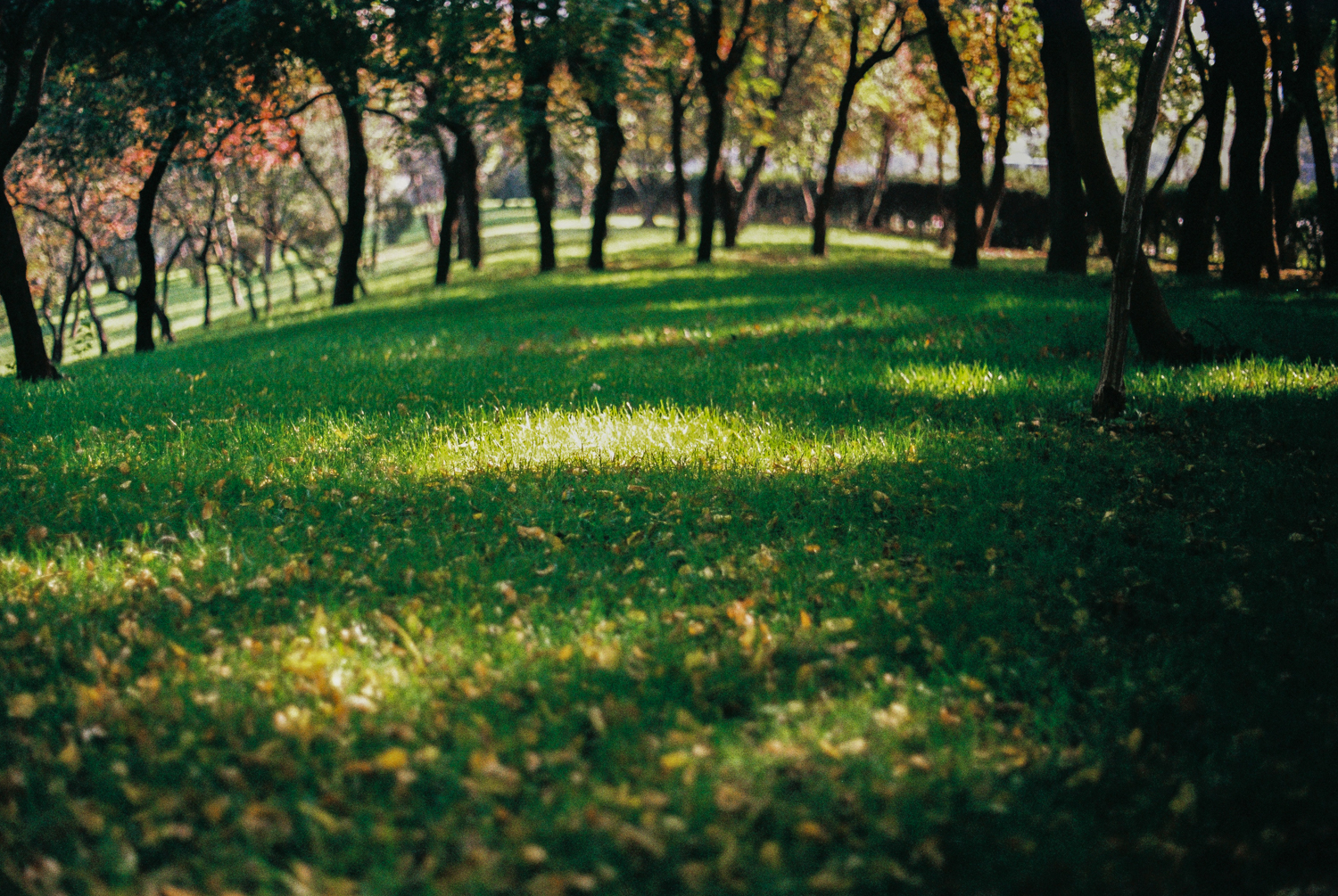Usual Park Days in Autumn – 35mm